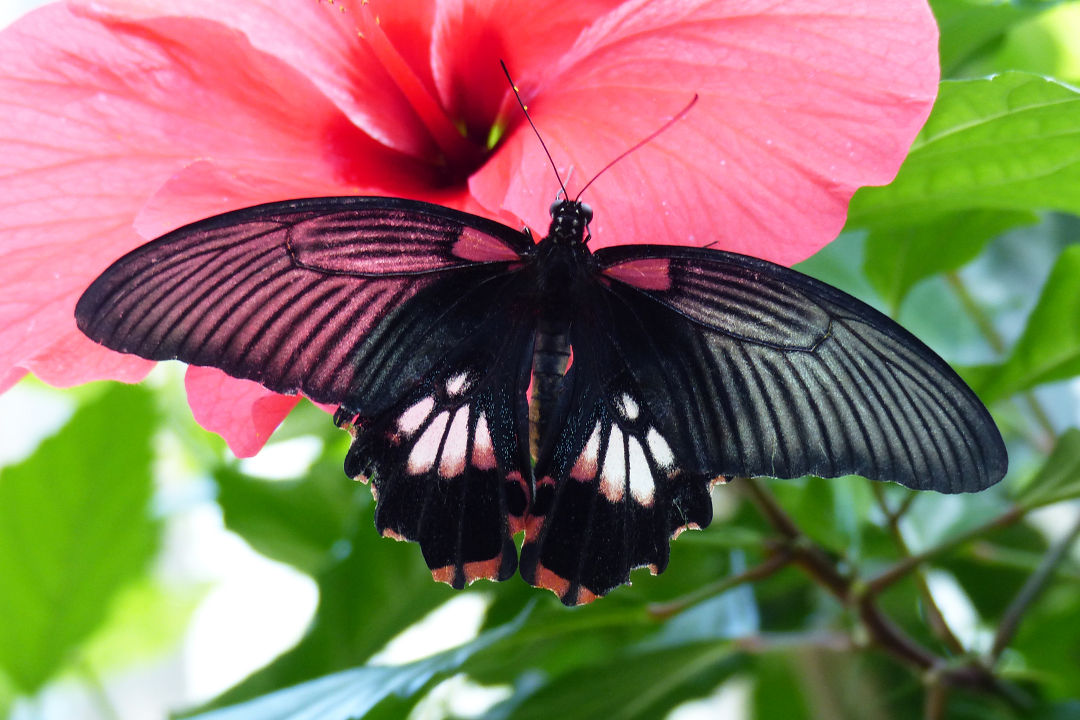 Butterfly House | Mainau Island