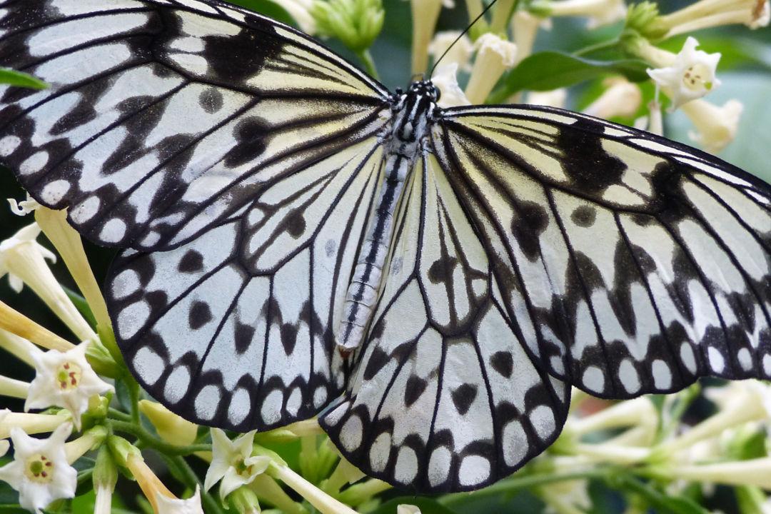 Attraktion Schmetterling Herzlich Willkommen Insel Mainau