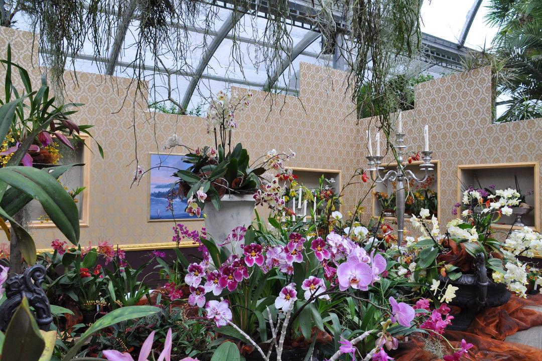 orchideenschau 2016 insel mainau. Black Bedroom Furniture Sets. Home Design Ideas