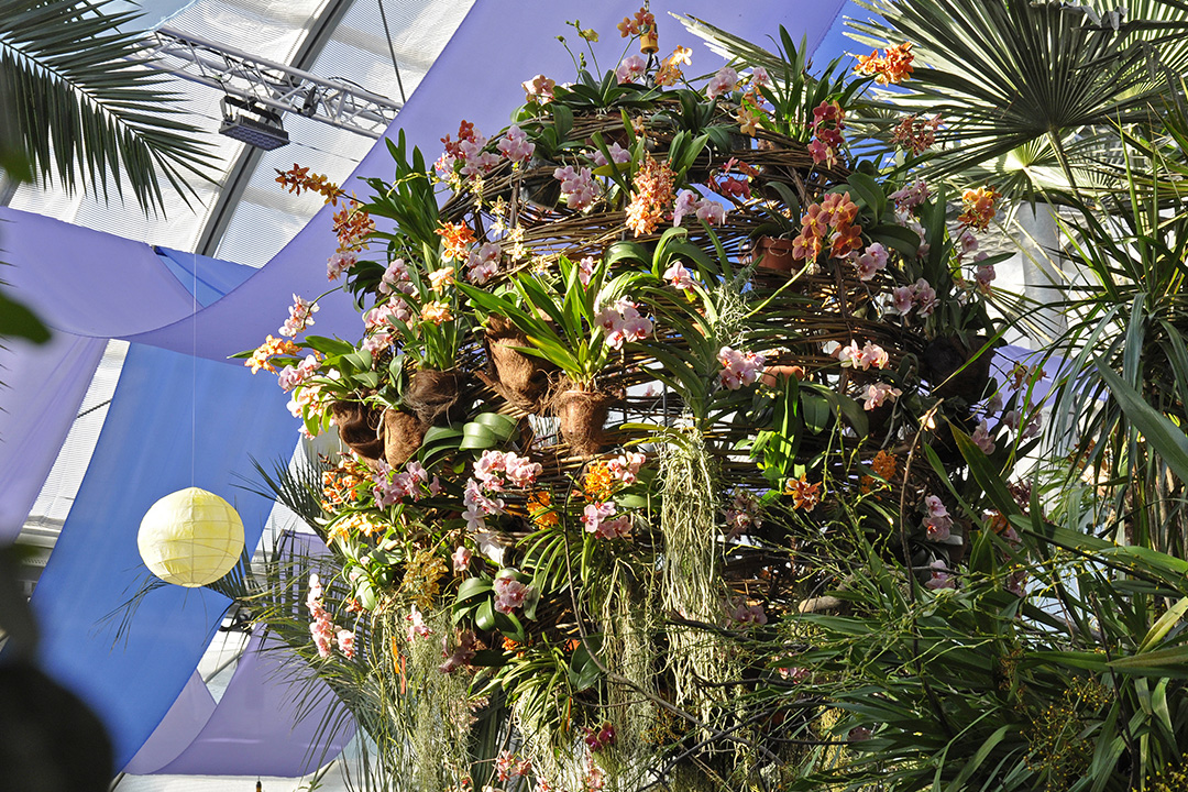 The Orchid Show 2019 | Mainau Island